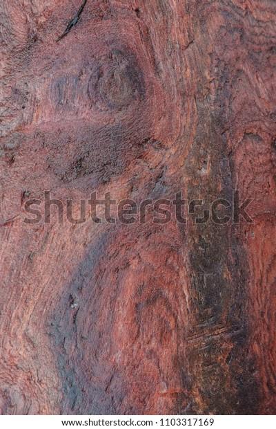 Redwood grain closeup