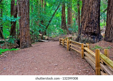 Redwood Grove, Big Sur, California