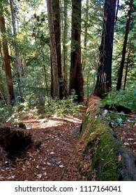 Redwood National Park in Northern California: Multiple Nature Pictures Close, Far, and Wide Angle
