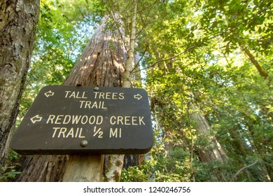 Redwood National and State Park in October - Northern California