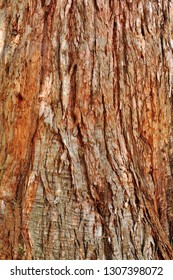 redwood tree bark texture