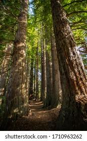 Redwoods, Hamurana federn, Neuseeland