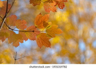 Red-yellow leaves of trees close-up. Autumn background.