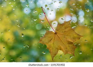 Red-yellow sheet on glass with water drops on blurred green background.