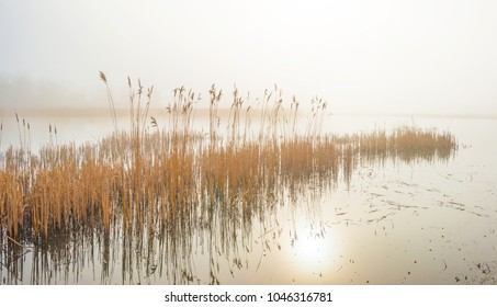 Reed along the edge of a foggy lake in sunlight in winter
