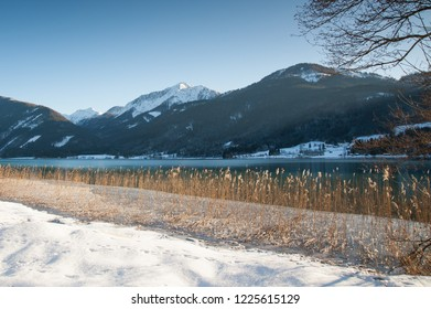 Reed along a frozen lake in winter at sunrise, Weissensee, Carinthia, Austria