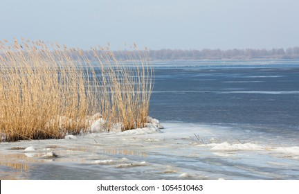 Reed along lake Eemmeer (the Netherlands)