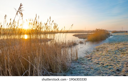 Reed along the sunny edge of a frozen blue lake in wetland in sunlight at sunrise in winter, Almere, Flevoland, The Netherlands, January 31, 2021