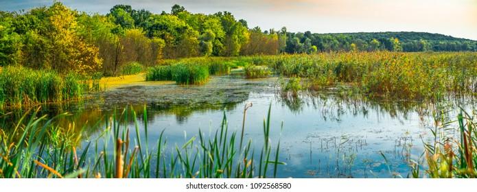 reed areas on lake