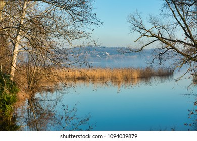 a reed bed on the lake of Varese with a hill in the background