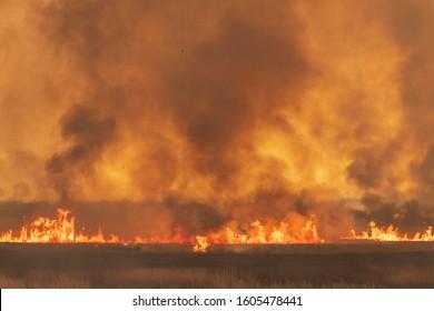 Reed burning in the Watarase retarding basin