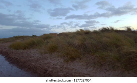 a reed dancing by the sea. Skegness, UK