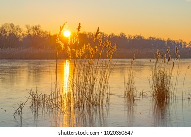 Reed in a field along a frozen lake in winter at sunrise