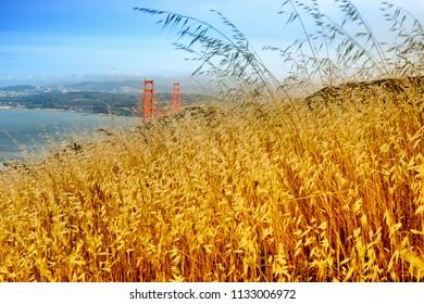Reed grass on headland, Golden Gate National Recreation Area, Golden Gate Bridge, The Presidio, San Francisco, California, USA