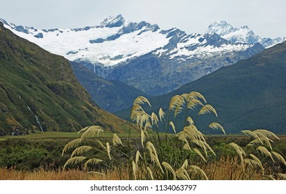 Reed in Mt Aspiring National Park, New Zealand
