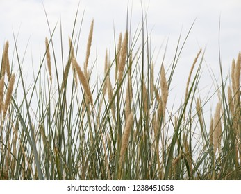 a reed overgrown shore by the sea
