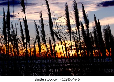 Reed plants at shore of a lake during sunset in winter