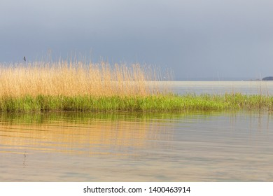 reed with reflections in the water with grey clouds in the background