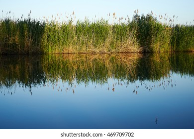 reed at the riverside, blue sky refleckted in water