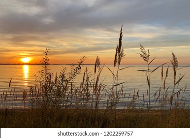Reed silhouette in beautiful sunset at the waterfront of lake Vättern in Vadstena, Sweden.