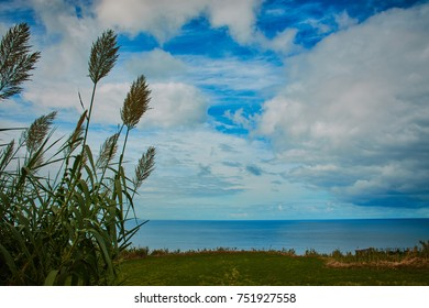 reeds and the Atlantic horizon on Sao Miguel Azores with blue sky