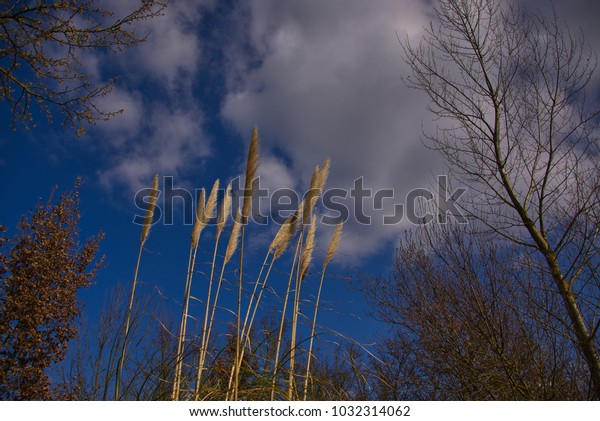 Reeds blowing in the wind