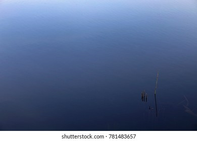 Reeds and blue water background
