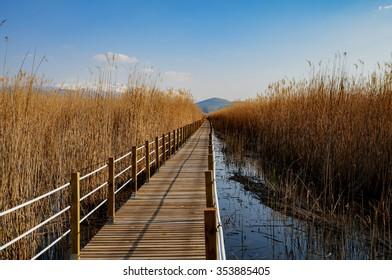 reeds, bridge and lake