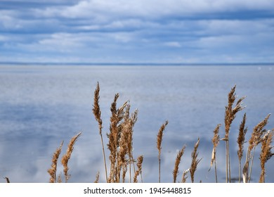 Reeds by seaside with blue water