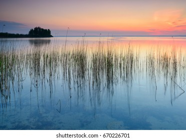 Reeds in Calm Lake at Sunrise