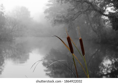 Reeds in foreground in colour rural backdrop of lake in Black and white and blurred