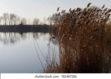 Reeds in lake, landscape