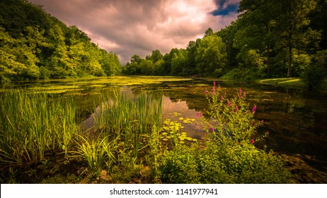Reeds, lily pads and purple loose strife on a lake with storm clouds in the sky