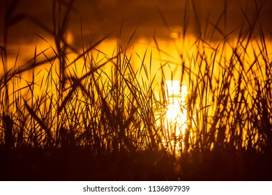 Reeds on the lake at sunset as a background