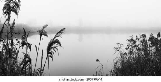 Reeds on river Bank. Misty autumn morning. Sad mood. Black and white photo