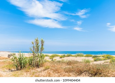 Reeds on the sand dunes on a golden beach on a summer day, Isla Canela, Andalucia, Spain. The sky is blue with white clouds.