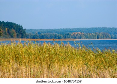 Reeds on the shore of the Pluszne lake in Masuria province. Poland, Europe.