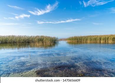 Reeds on the shore of the Zalew Szczeciński. Szczecin Lagoon.