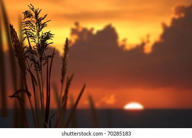 Reeds and orange sunset