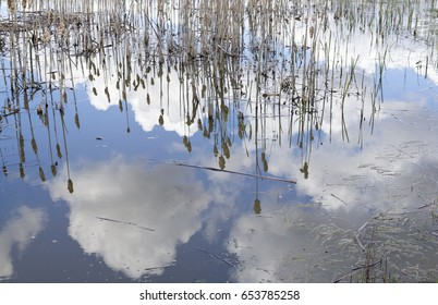 Reeds reflecting in a lake with blue sky and fluffy clouds