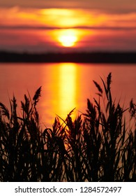 Reeds at sunset in a beautiful seascape in Vaasa, Finland. Dramatic  red sky on the background. Selective focus with shallow depth of field. Vertical image.