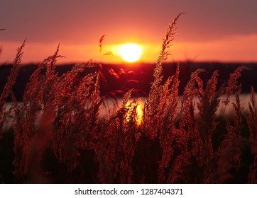 Reeds at sunset in a beautiful seascape in Vaasa, Finland. Dramatic  red sky on the background. Selective focus with shallow depth of field.