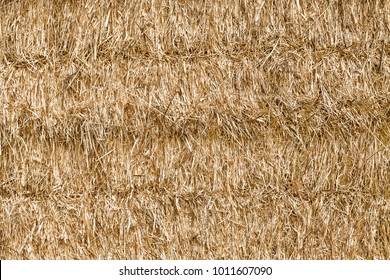 Reeds texture. Straw surface. Thatch pack canvas. Straw pack texture. Stack of straw texture image. Dry stems photo backdrop. Dry stalks of cereal plants background. Dry stems of cereals in sunny day