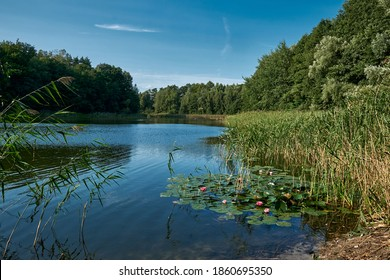 """Reeds with water lilies at the northern part of the """"Gamensee"""" lake near Krummenpfahl"""