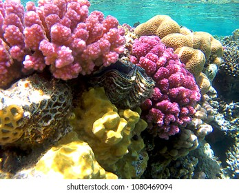 Reef corals underwater in Ras Mohammed, Egypt, Red Sea