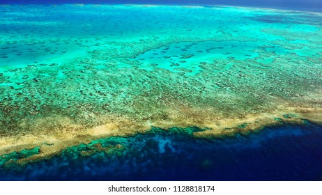 From the reef crust to the shallow lagoon (Lodestone Reef, Great Barrier Reef)
