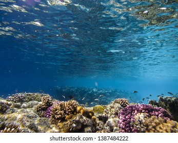 Reef, Egyptian Red sea with fish