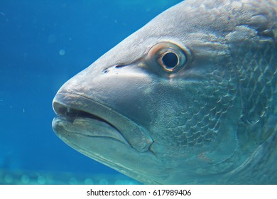 REEF FISH CLOSE UP