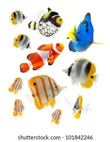 reef fish, marine fish isolated on white background