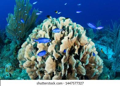 Reef fish Underwater in Belize scuba diving